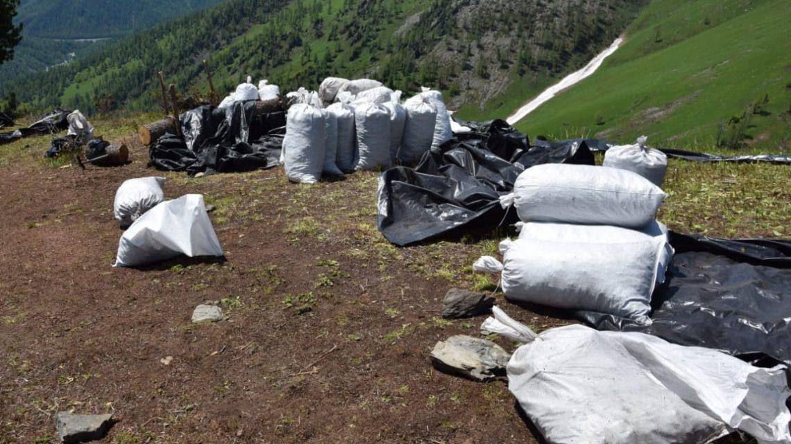 Пограничники в Республике Алтай пресекли незаконную добычу краснокнижных растений
