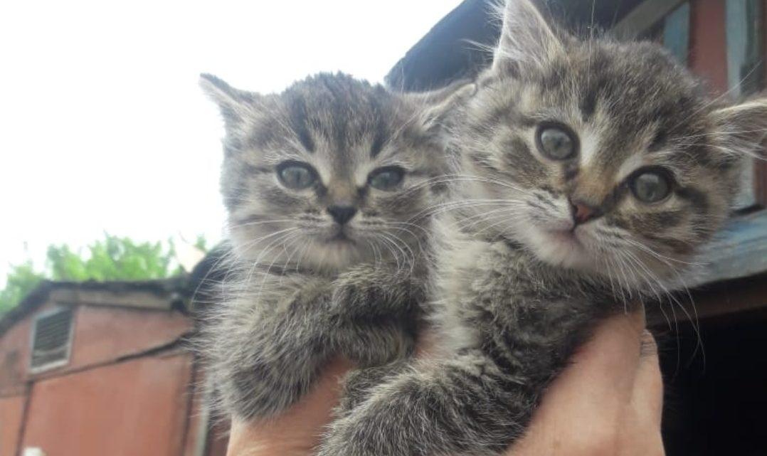 Коты в добрые руки