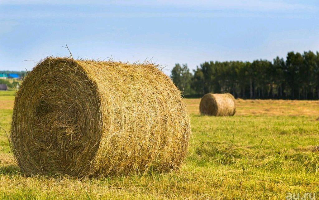 Заготовка кормов идет полным ходом