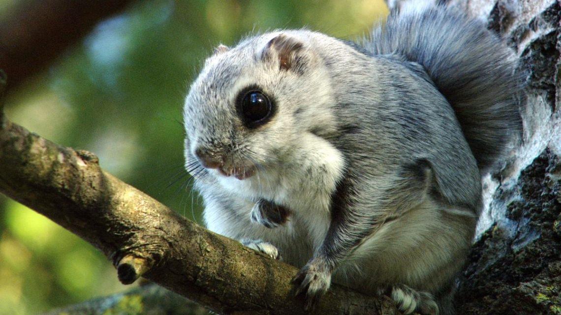 Новый вид животных зафиксировали в Катунском заповеднике