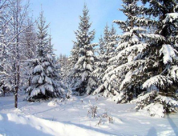 Погода в Республике Алтай 26 февраля