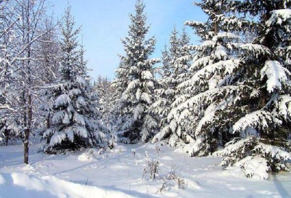 Погода в Республике Алтай 24 февраля