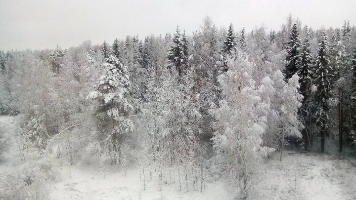 Погода в Республике Алтай 25 февраля