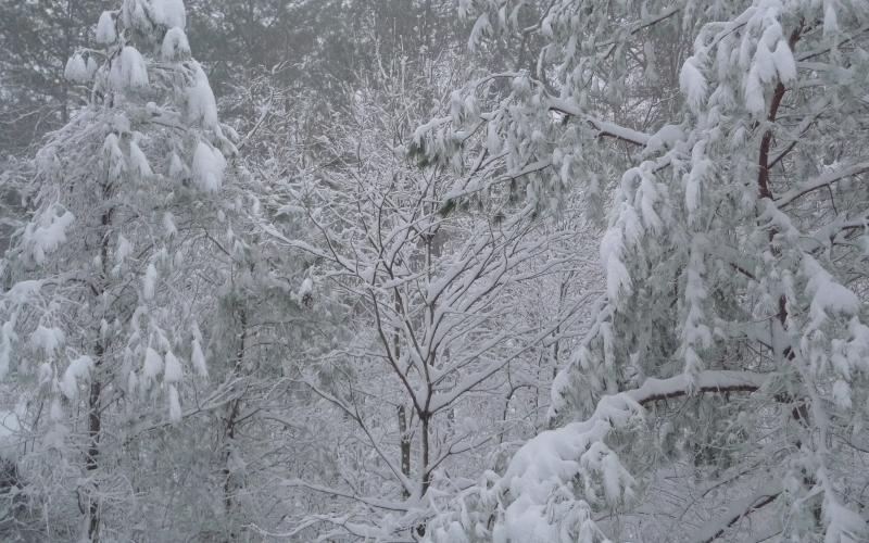 Погода в Республике Алтай 23 февраля