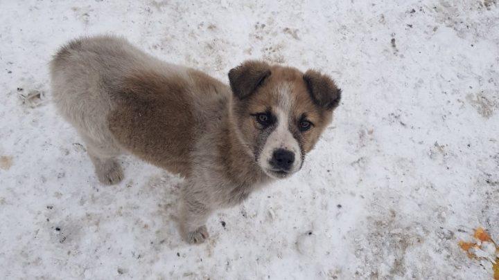 В Республике Алтай появятся официальные приюты для животных