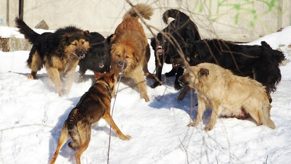 У усть-канских собак – ни площадок, ни приютов