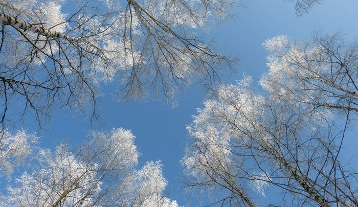 Погода в Республике Алтай 25 марта