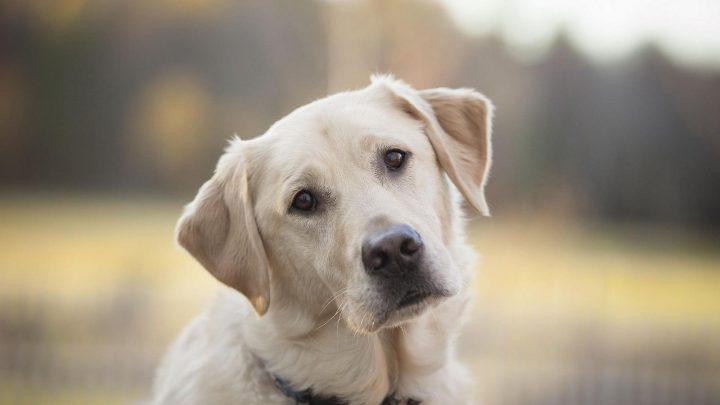 О коронавирусной инфекции COVID-19 владельцам домашних животных