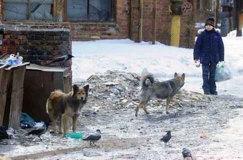 Нерадивым владельцам собак выпишут штраф