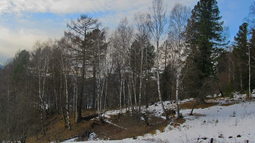 Погода в Республике Алтай 21 марта