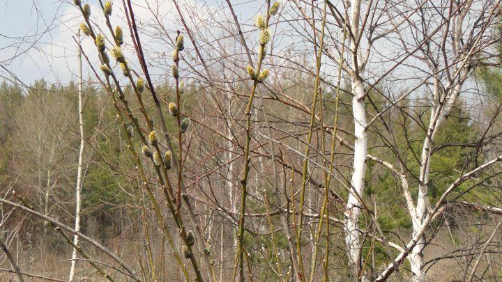 Погода в Республике Алтай 7 апреля