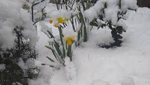 Погода в Республике Алтай 10 апреля